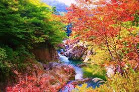 夏井川渓谷(紅葉).png
